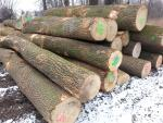 Ash Saw logs |  Hardwood | Logs | TRANS-WOOD
