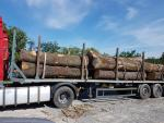 Oak Saw logs |  Hardwood | Logs | 19th-Wood s.r.o.