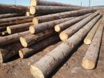 Spruce Saw logs |  Softwood | Logs | TRANS-WOOD